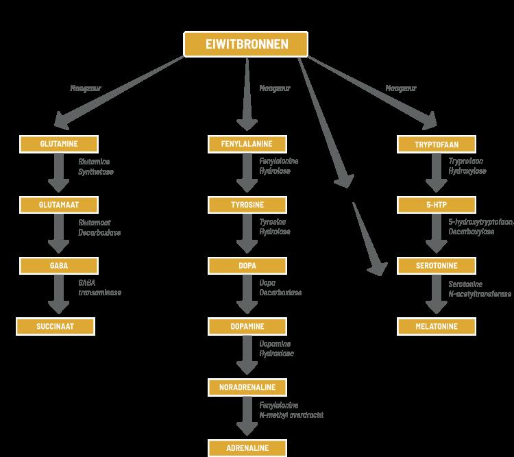 Dopamine en Serotonine schema