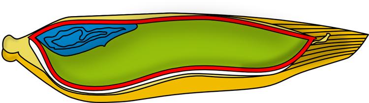 Graankorrel