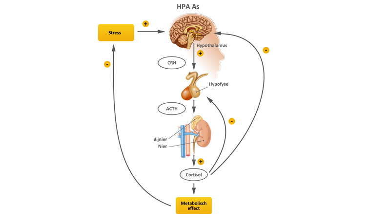 HPA-As