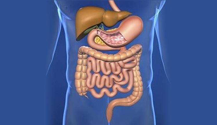 Maag- en darmstelsel (Spijsvertering)