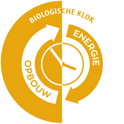 Infographic Biologische Klok