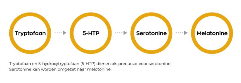 Infographic Serotonine